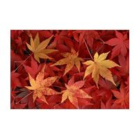 Canvas Wall Painting Dry Maple Leaves