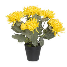 Forest Chrysanthemum Plant Pot - @home By Nilkamal, Yellow