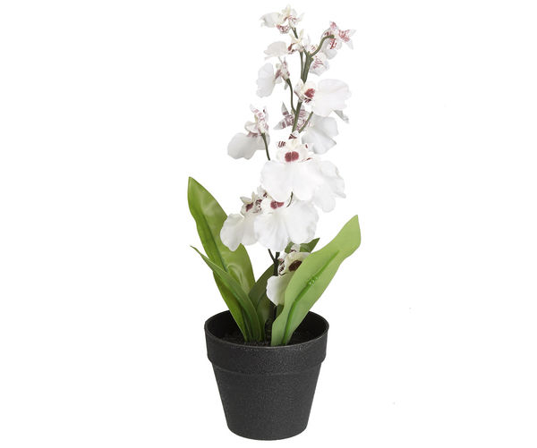 Forest Orchid Mini Plant Pot - @home By Nilkamal, White
